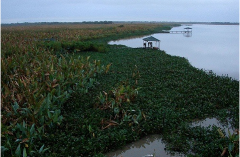 Ria Formosa Nature Park, an important ecological site