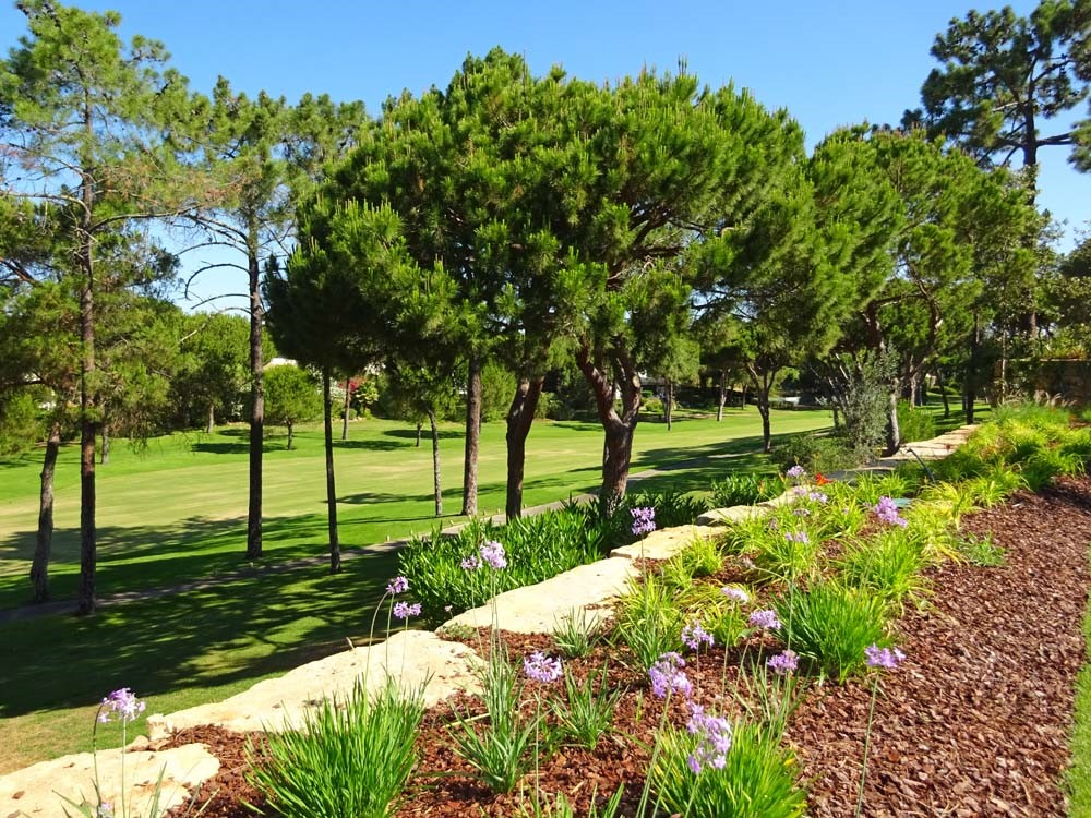 Golf Views 1