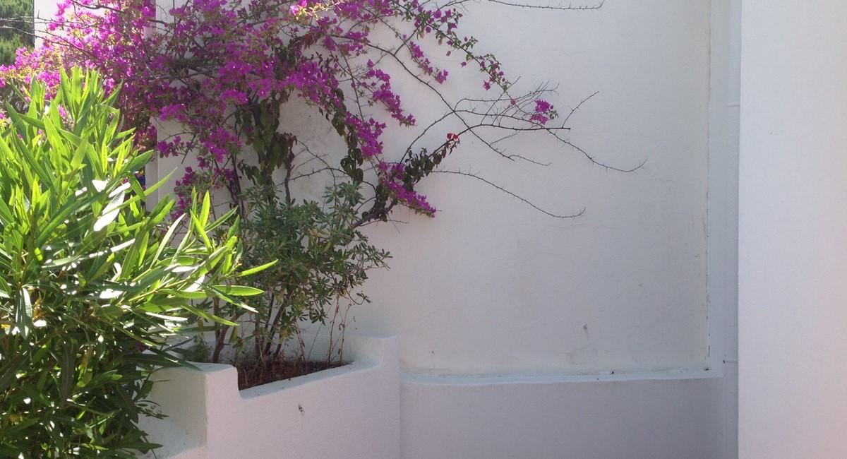 Terrace Plant
